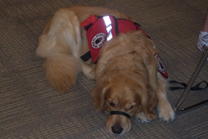Walker, Grace Lindsey's therapy dog senses seizures and helps her with anxiety. Photo by Haley Hansel.